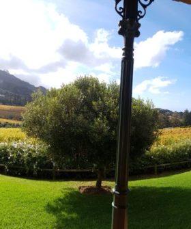 Das Constantia Glen Weingut – Ursprung unserer Weine